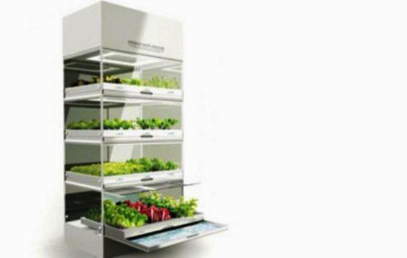 Kitchen Nano Garden Ideas